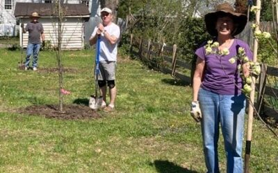 """""""Arbor Team"""" plants trees in the new Max Silver Memorial Courtyard"""